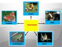 птахи звірі риби земноводні комахи ТВАРИНИ
