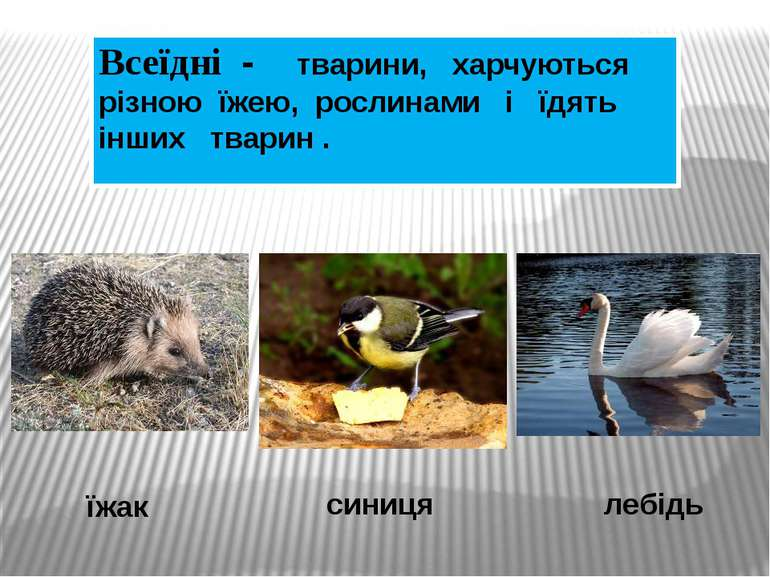Интернет- ресурси: , http://viki.rdf.ru/item/880/download/ - хижаки http://vi...