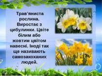 Трав'яниста рослина. Виростає з цибулинки. Цвіте білим або жовтим цвітом наве...