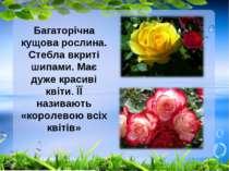 Багаторічна кущова рослина. Стебла вкриті шипами. Має дуже красиві квіти. ЇЇ ...