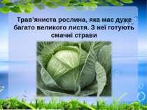 Трав'яниста рослина, яка має дуже багато великого листя. З неї готують смачні...