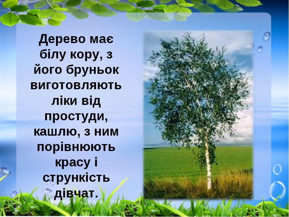 Дерево має білу кору, з його бруньок виготовляють ліки від простуди, кашлю, з...