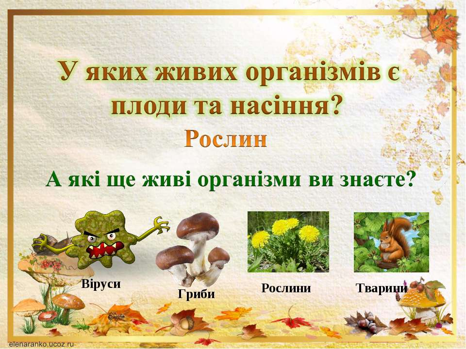 Віруси Гриби Рослини Тварини