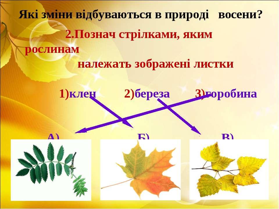 2.Познач стрілками, яким рослинам належать зображені листки 1)клен 2)береза 3...