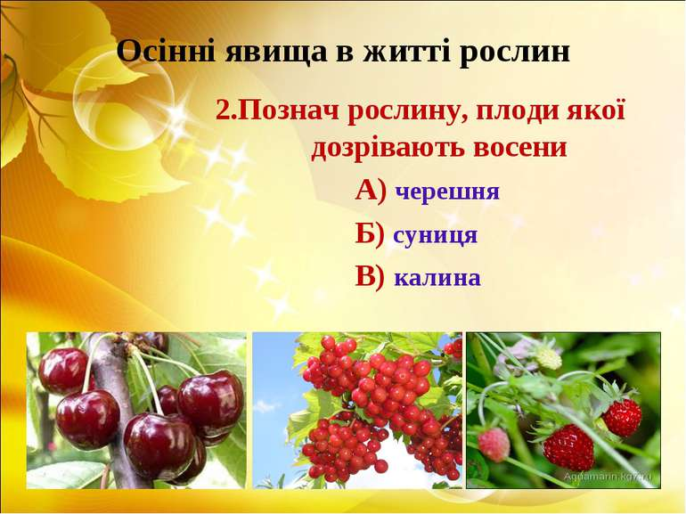 Осінні явища в житті рослин 2.Познач рослину, плоди якої дозрівають восени А)...