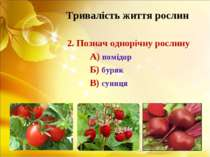 Тривалість життя рослин 2. Познач однорічну рослину А) помідор Б) буряк В) су...