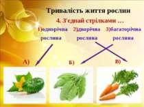 Тривалість життя рослин 4. З'єднай стрілками … 1)однорічна 2)дворічна 3)багат...