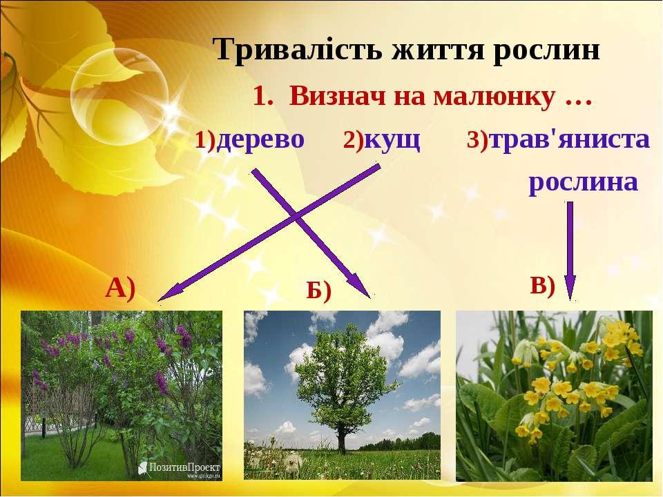 Тривалість життя рослин Визнач на малюнку … 1)дерево 2)кущ 3)трав'яниста росл...