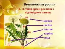 Розмноження рослин З'єднай орган рослини з відповідною назвою квітка стебло л...