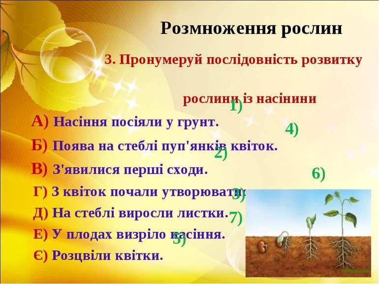 Розмноження рослин 3. Пронумеруй послідовність розвитку рослини із насінини А...