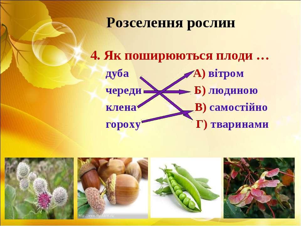 Розселення рослин 4. Як поширюються плоди … дуба А) вітром череди Б) людиною ...