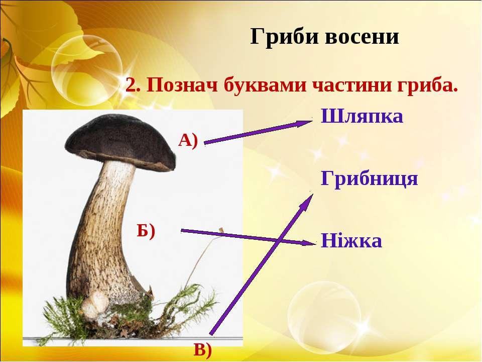Гриби восени 2. Познач буквами частини гриба. Шляпка Грибниця Ніжка А) Б) В)