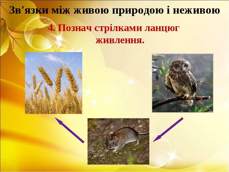 Зв'язки між живою природою і неживою 4. Познач стрілками ланцюг живлення.