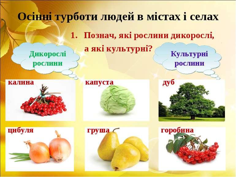 Осінні турботи людей в містах і селах Познач, які рослини дикорослі, а які ку...