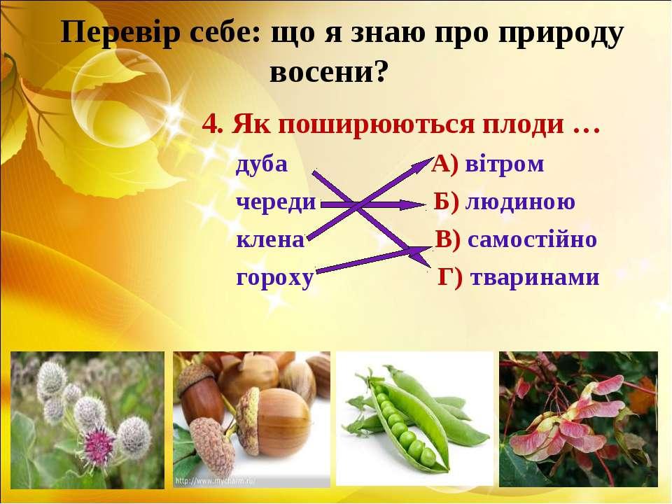 Перевір себе: що я знаю про природу восени? 4. Як поширюються плоди … дуба А)...
