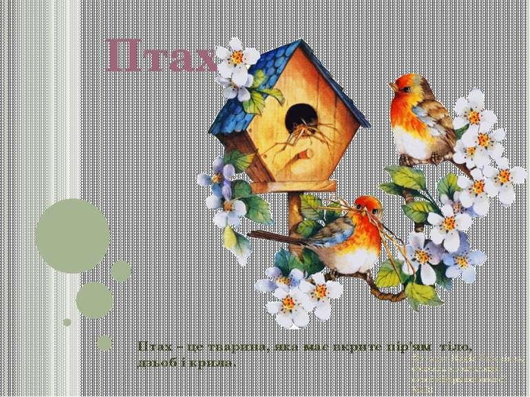 Птахи Птах – це тварина, яка має вкрите пір'ям тіло, дзьоб і крила. Фролова Н...