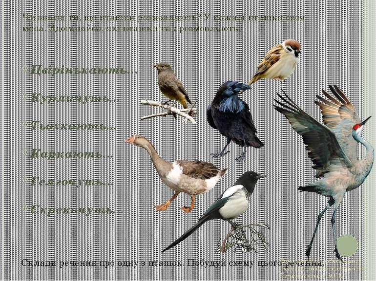 Чи знаєш ти, що пташки розмовляють? У кожної пташки своя мова. Здогадайся, як...