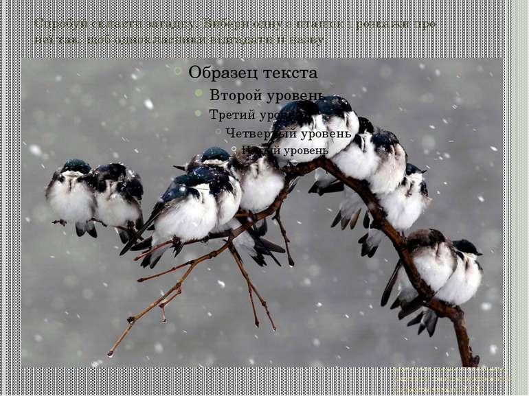 Спробуй скласти загадку. Вибери одну з пташок і розкажи про неї так, щоб одно...