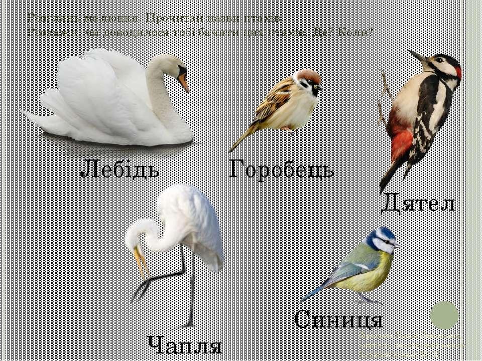 Розглянь малюнки. Прочитай назви птахів. Розкажи, чи доводилося тобі бачити ц...