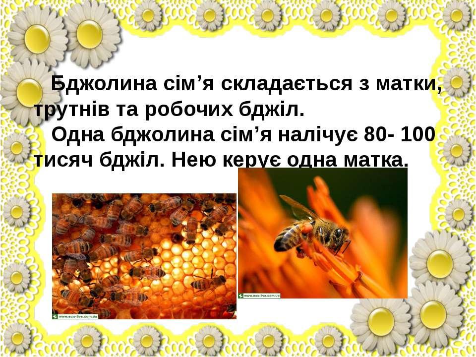 Бджолина сім'я складається з матки, трутнів та робочих бджіл. Одна бджолина с...