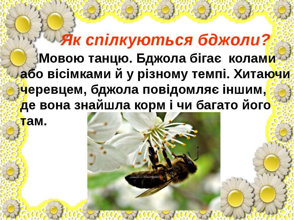Як спілкуються бджоли? Мовою танцю. Бджола бігає колами або вісімками й у різ...