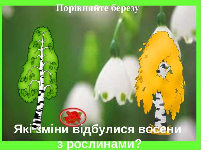 Порівняйте березу Які зміни відбулися восени з рослинами?