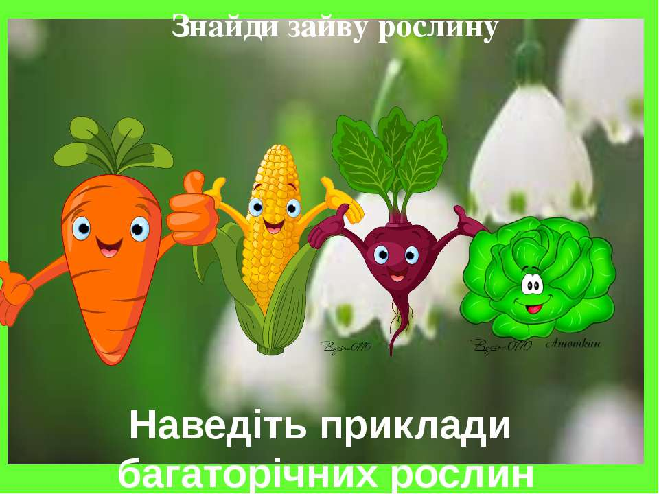 Знайди зайву рослину Наведіть приклади багаторічних рослин