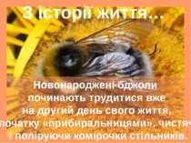 З історії життя… Новонароджені бджоли починають трудитися вже на другий день ...