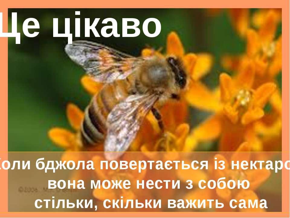 Коли бджола повертається із нектаром, вона може нести з собою стільки, скільк...