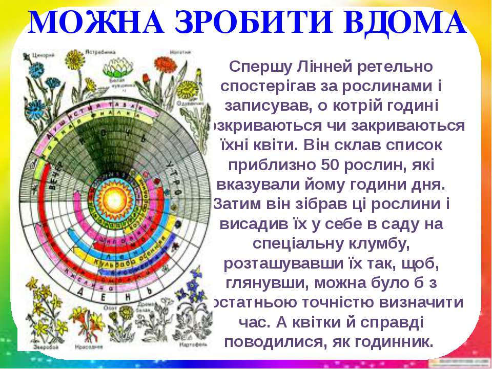 Спершу Лінней ретельно спостерігав за рослинами і записував, о котрій годині ...