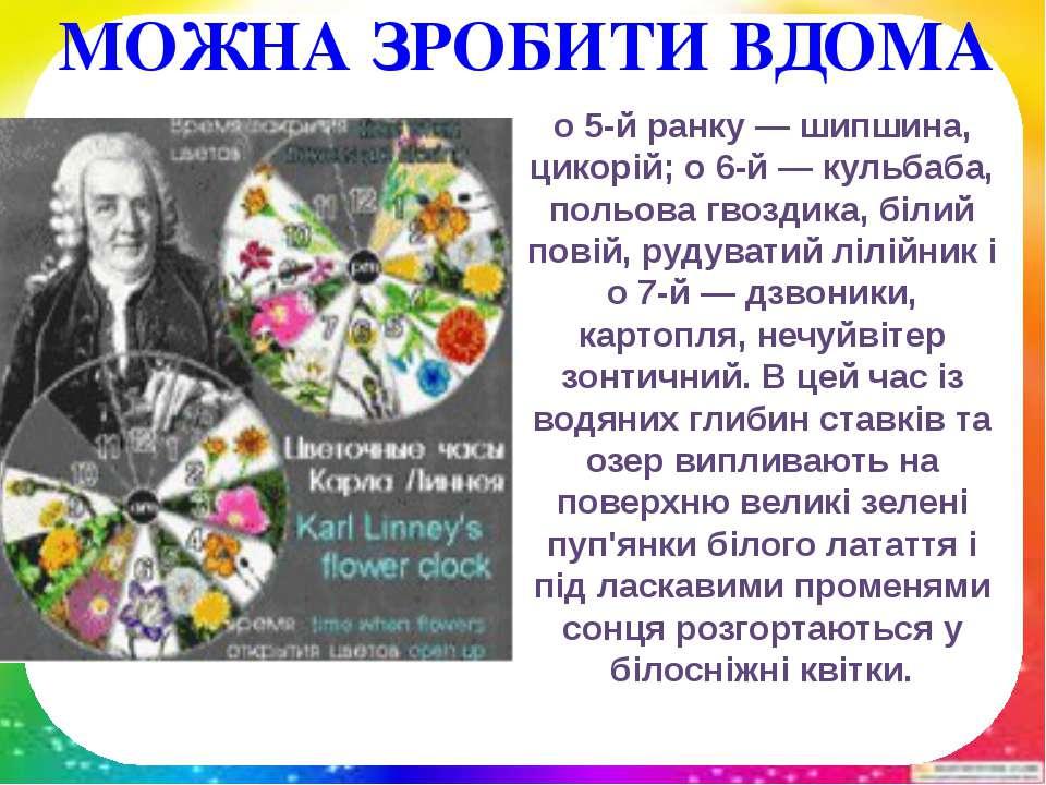 о 5-й ранку — шипшина, цикорій; о 6-й — кульбаба, польова гвоздика, білий пов...