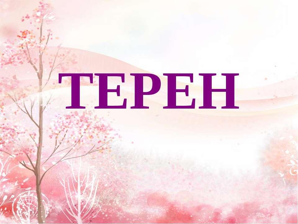 ТЕРЕН