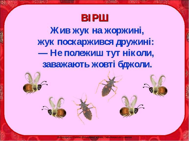 Жив жук на жоржині, жук поскаржився дружині: — Не полежиш тут ніколи, заважаю...