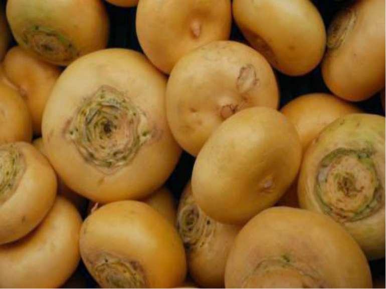 Словникова робота з використанням малюнків Ріпа — … овочева рослина білого, ж...
