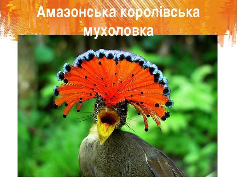 Амазонська королівська мухоловка