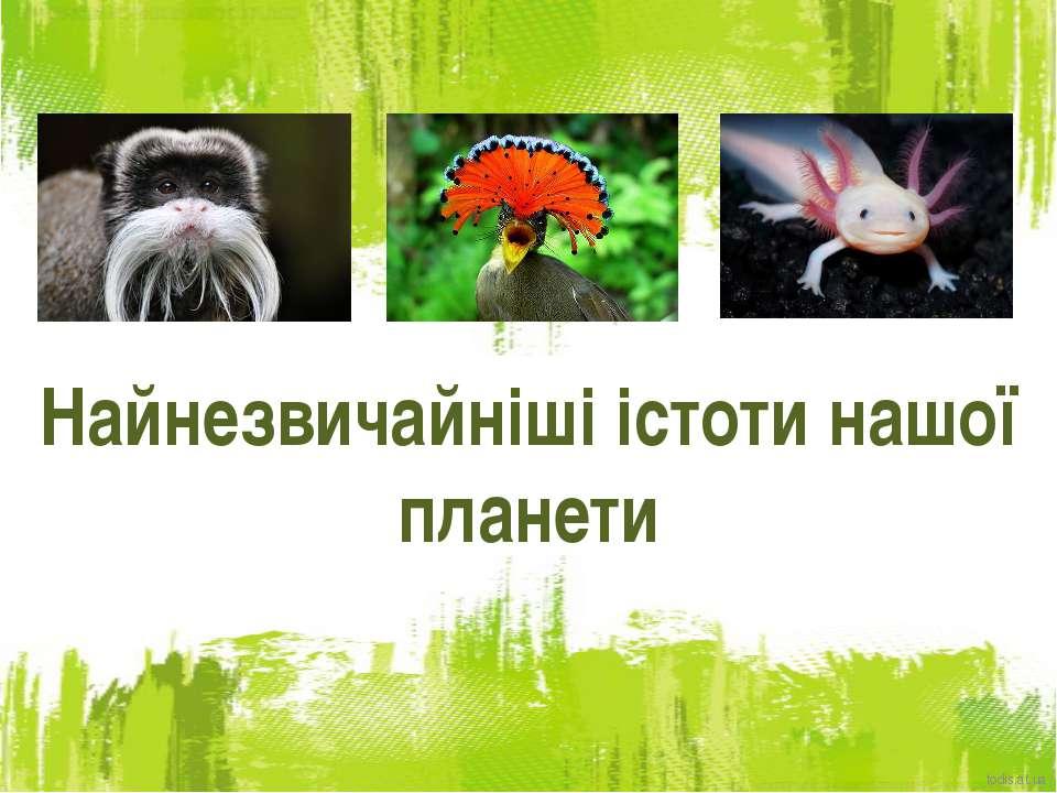 Найнезвичайніші істоти нашої планети todis.at.ua