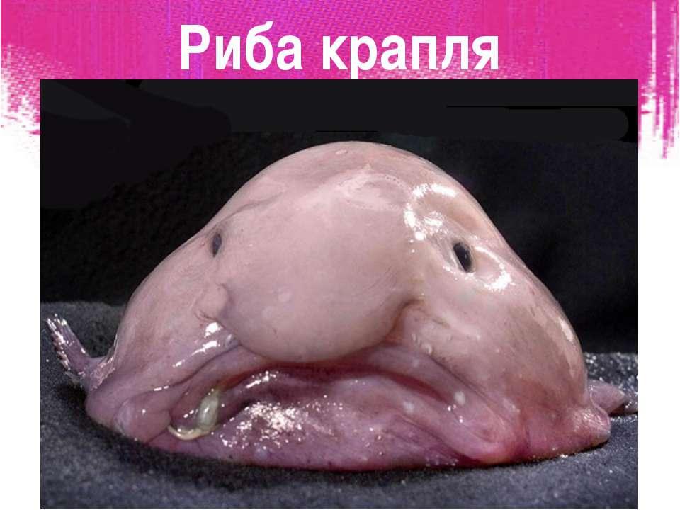 Риба крапля