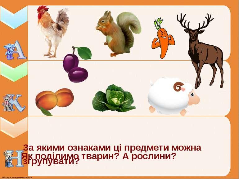 За якими ознаками ці предмети можна згрупувати? Як поділимо тварин? А рослини?
