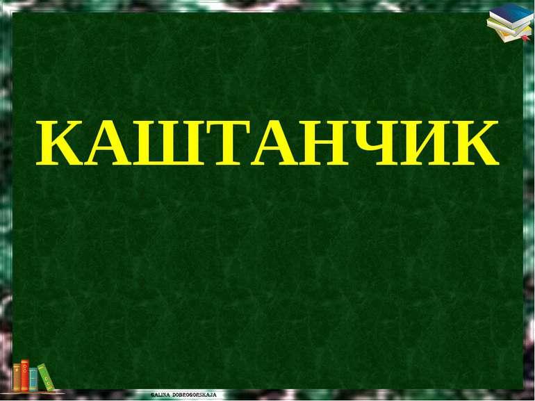 КАШТАНЧИК