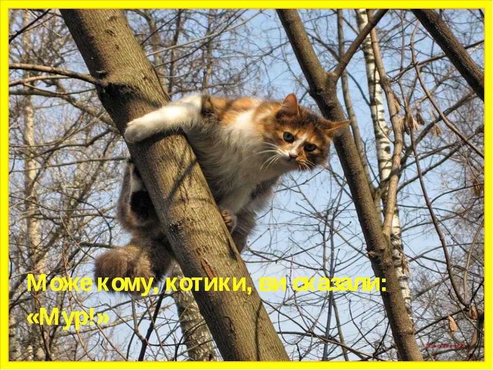 Може кому, котики, ви сказали: «Мур!» Може кому, котики, ви сказали: «Мур!»