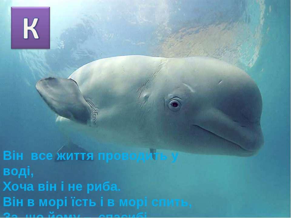 Він все життя проводить у воді, Хоча він і не риба. Він в морі їсть і в морі ...