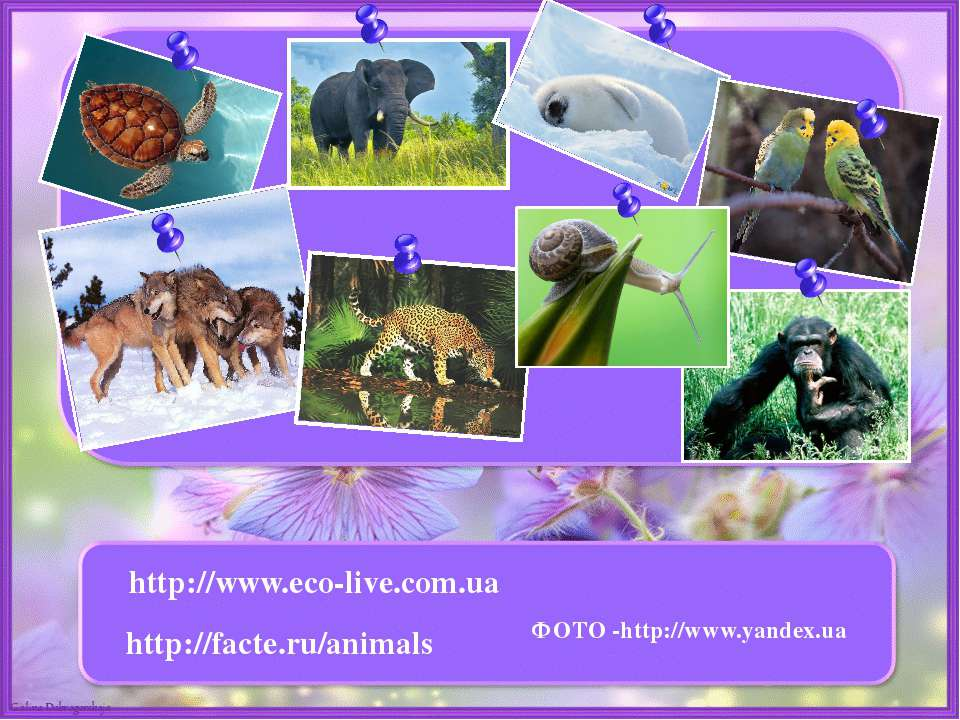 http://www.eco-live.com.ua http://facte.ru/animals ФОТО -http://www.yandex.ua