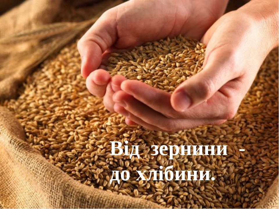 Від зернини - до хлібини.