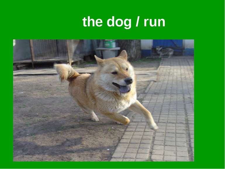 the dog / run
