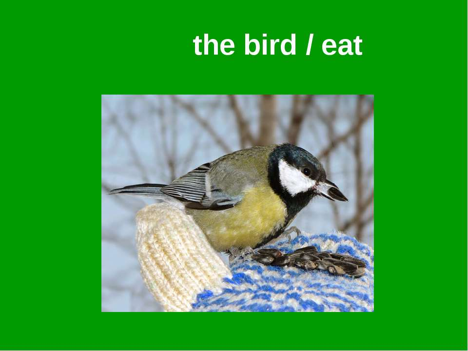 the bird / eat