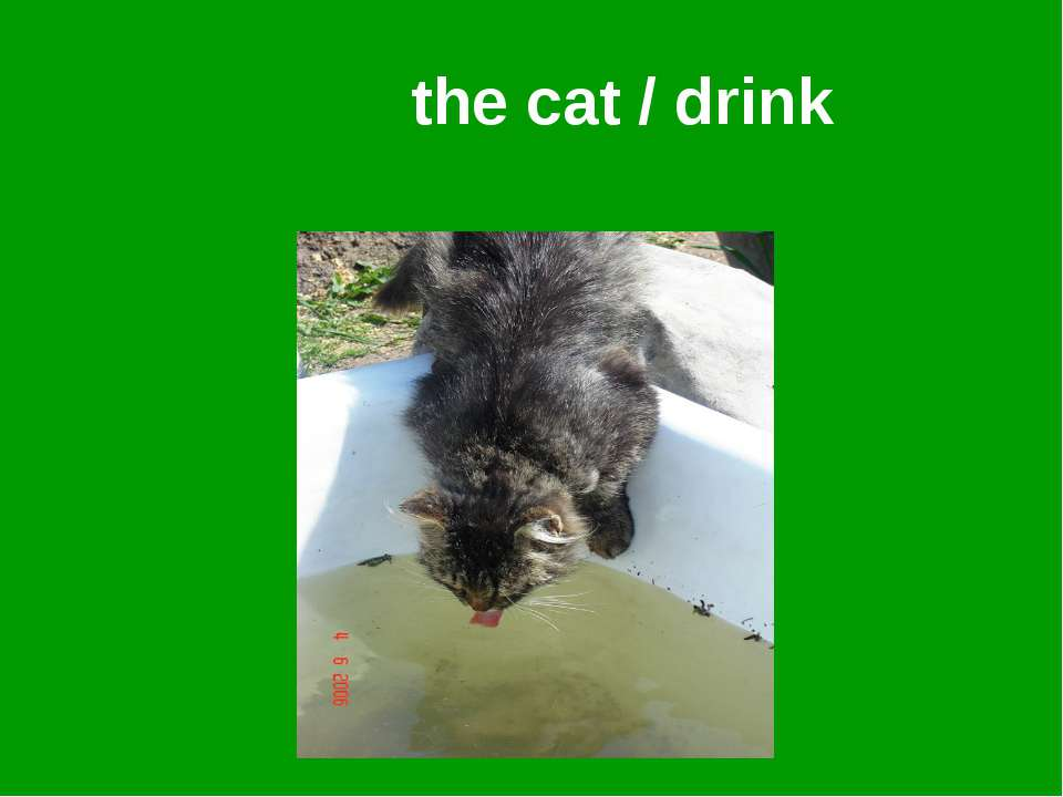 the cat / drink