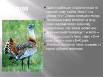 Дрохва Один з найбільших і рідкісних птахів на території нашої країни. Маса ї...