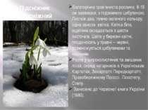 Підсніжник білосніжний Багаторічна трав'яниста рослина, 8-15 см заввишки, з п...