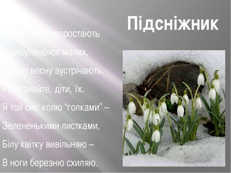 Перші квіти проростають З цибулиночок малих, Кожну весну зустрічають, Розпізн...