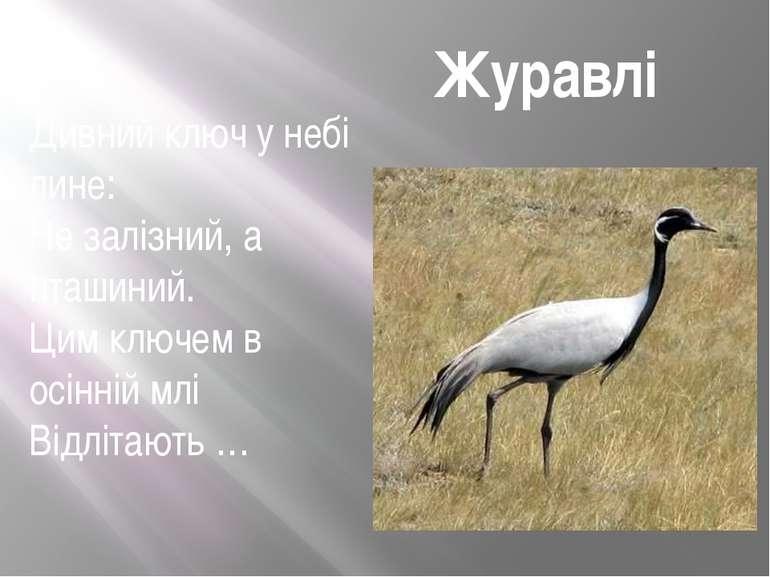 Журавлі Дивний ключ у небі лине: Не залізний, а пташиний. Цим ключем в осінні...